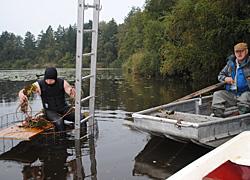 Rettung der Wasserpflanzenwelt im Steegersee